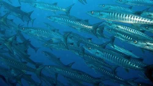 sito di incontri di pesce gancio